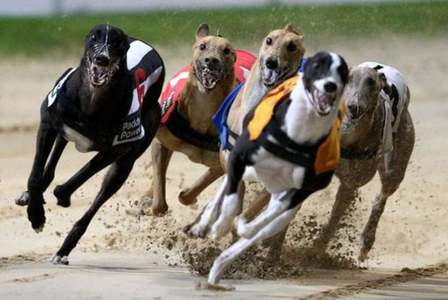 Greyhound Racing Fund Gets £3m Extra from Bookmakers